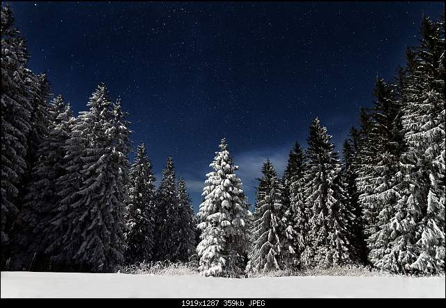 Click image for larger version.  Name:snowtrees.jpg Views:74 Size:358.5 KB ID:27180