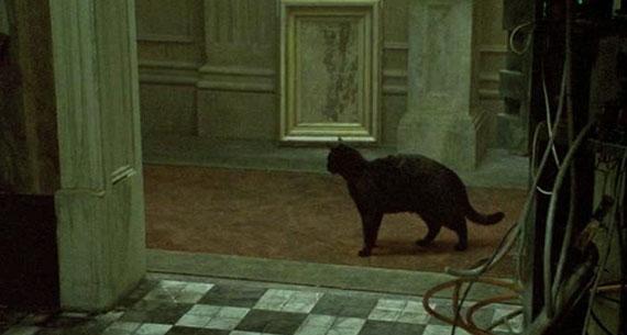 Name:  blackcat.jpg Views: 1239 Size:  31.5 KB