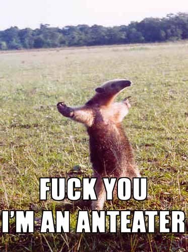 Name:  anteater.jpg